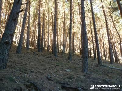 Chorro de San Mamés - Montes Carpetanos -rutas senderismo madrid;senderismo españa rutas mundo sin
